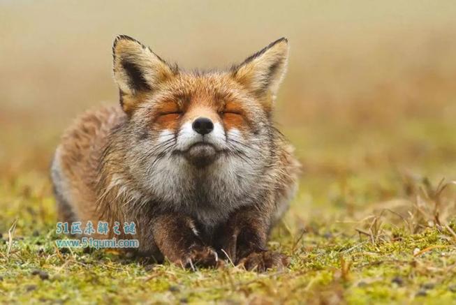 狐仙到底是不是真实存在?狐狸可以修炼成精吗?