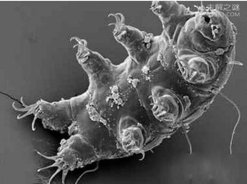 火星人的祖先水熊虫,与太用同寿的生物
