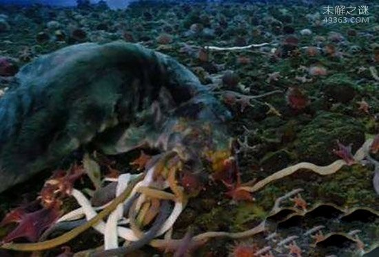 南极巨虫专吃腐烂的食物,南极巨虫对人类有危害吗