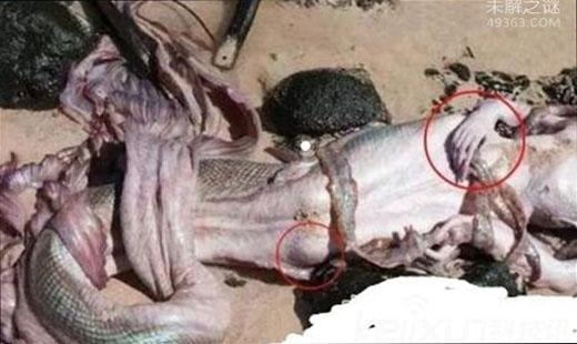 揭秘美国捕获黑鳞鲛人是怎么回事?